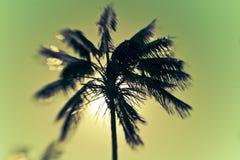 Palm Tree on Beautiful Island Paradise Royalty Free Stock Photo