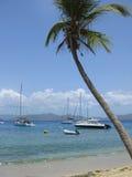Palm Tree. A beautiful Palm Tree looks over the beach on Cooper Island near Virgin Gorda, in the British Virgin Islands Stock Photo