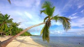 Palm tree on beautiful ocean beach in dominican republic stock video