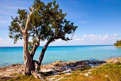Palm tree on the beautiful Playa Giron, Cuba Royalty Free Stock Photography