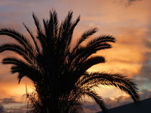 Palm tree in a beautiful romantic sunset Stock Photography