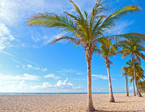 Palm tree on a beautiful sunny summer afternoon in Hollywood Beach Royalty Free Stock Photo