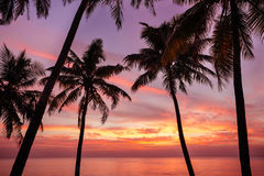 Palm tree and beautiful sunset on the beach Royalty Free Stock Images