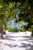Palm Tree. Beautiful thickets of trees and bushes on the beach Royalty Free Stock Photography
