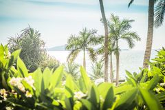 Palm Tree. Beautiful thickets of trees and bushes on the beach. royalty free stock image