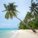 Palm tree on the beautiful tropical beach Stock Photos