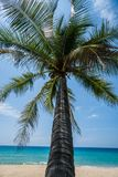 Tropical beach with palm tree. Palm tree on the beautiful tropical sandy beach over blue sea and sky background Stock Images