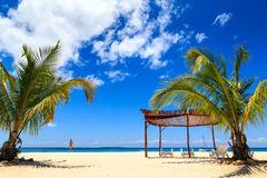 Palm tree and beds  on a tropical beach Stock Image