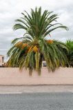Palm tree behind plastered wall Stock Image