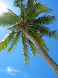 Palm tree from below Stock Images