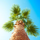 Palm tree from below photographed Stock Images