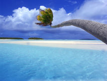 Palm Tree bending across lagoon Stock Photos