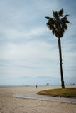Palm tree and bike path on the beach, in Venice Beach  Royalty Free Stock Photos