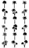 Palm tree black outline silhouette vector illustration Stock Photography