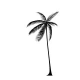 Palm tree black silhouette isolated over white Royalty Free Stock Images