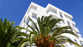 Palm tree with block of flats in the background Royalty Free Stock Images