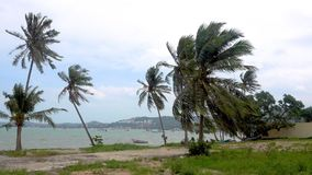 Palm tree blowing in the wind. On the background of the ocean. Koh Samui, Thailand stock video footage