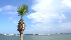 Palm tree blowing in the wind. Beautiful palm tree blowing in the Florida wind on a sunny day stock footage