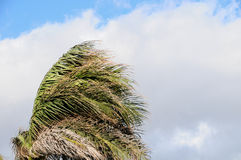 Palm Tree Blowing In The Wind Stock Photos