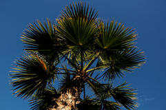 Palm Tree Blowing In The Wind Stock Images
