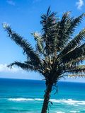 Palm tree blowing in the wind on tropical island Stock Image
