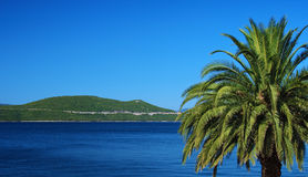 Palm Tree on Blue. Palm Tree over Adriatic Sea in Croatia Royalty Free Stock Photo