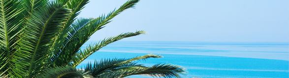 Palm tree and blue Royalty Free Stock Image