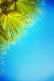 Palm tree on blue Stock Image