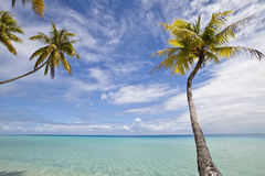 Palm tree and blue lagoon. Palm tree alone on blue lagoon of paradise island Royalty Free Stock Photo