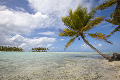 Palm tree on blue lagoon of desert island Royalty Free Stock Photo