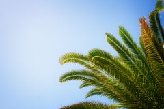 Palm tree on blue Royalty Free Stock Photography