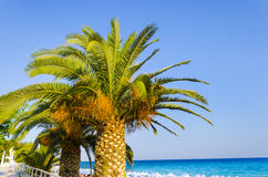 Palm tree and blue ocean Stock Photos