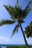 Palm tree and blue pacific ocean. Royalty Free Stock Photography