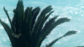 Palm tree on blue sea background, tropical summer vacation, exotic island travel stock footage