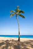 Palm tree with blue sky. On tropical beach Royalty Free Stock Photos