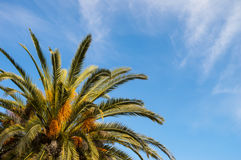 Palm tree. And blue sky Stock Photo