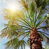 Palm tree and blue sky Royalty Free Stock Photos
