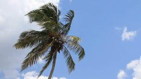 Palm tree on blue sky background stock footage