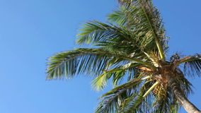 Palm tree in blue sky. Background stock video