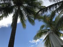 palm tree with blue sky Stock Photos