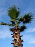 Palm tree on blue sky background Royalty Free Stock Images