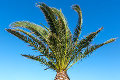 Palm tree on blue sky background. Stock Photos