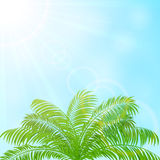 Palm tree on blue sky background Stock Images
