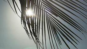 Palm tree on blue sky background moving on wind through the sun with lens flare effects. slow motion. 1920x1080. Hd stock footage