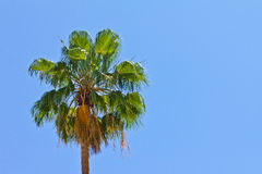 Palm Tree on Blue Sky Background Royalty Free Stock Image
