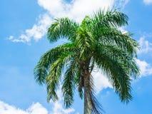 Palm tree on blue sky Stock Image