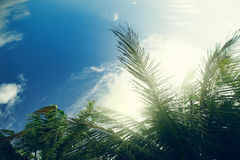 Palm tree at blue sky with clouds Stock Photos