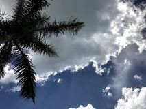 Palm Tree with Blue Sky and Clouds Royalty Free Stock Photos