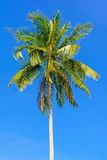 Palm tree in blue sky Stock Photos