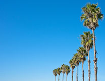 Palm tree blue sky frame. Palm trees in a row against blue sky frame Royalty Free Stock Images